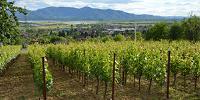 Objavljen je natječaj za konverziju vinograda