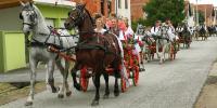 Razigrani lipicanci u Slavonskom Kobašu
